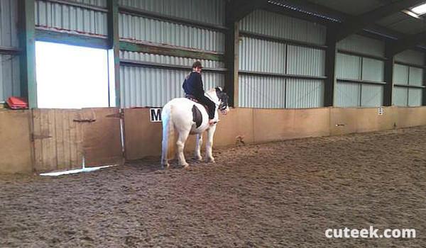 longfield equestrian centre todmorden