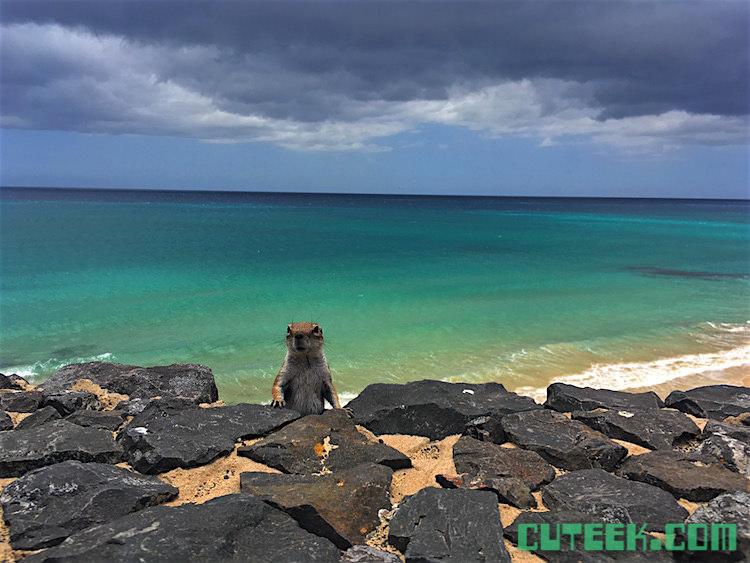 Fuerteventura Squirrel