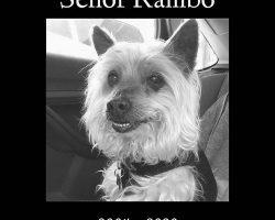 In Loving Memory of Rambo