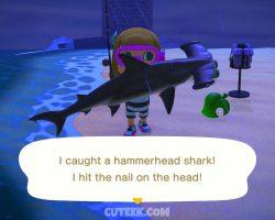 ACNH Hammerhead Shark
