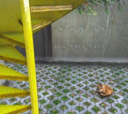 GTAV Bertolt Beach House Yellow Stairs