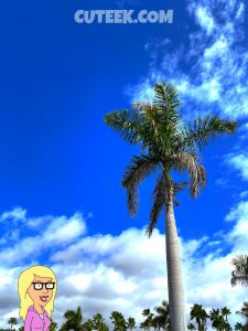Palm Tree Blue Skies