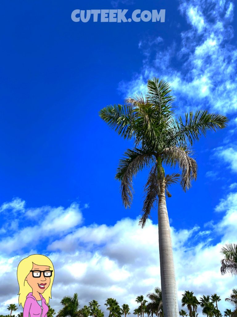 Palm Tree Blue Skies