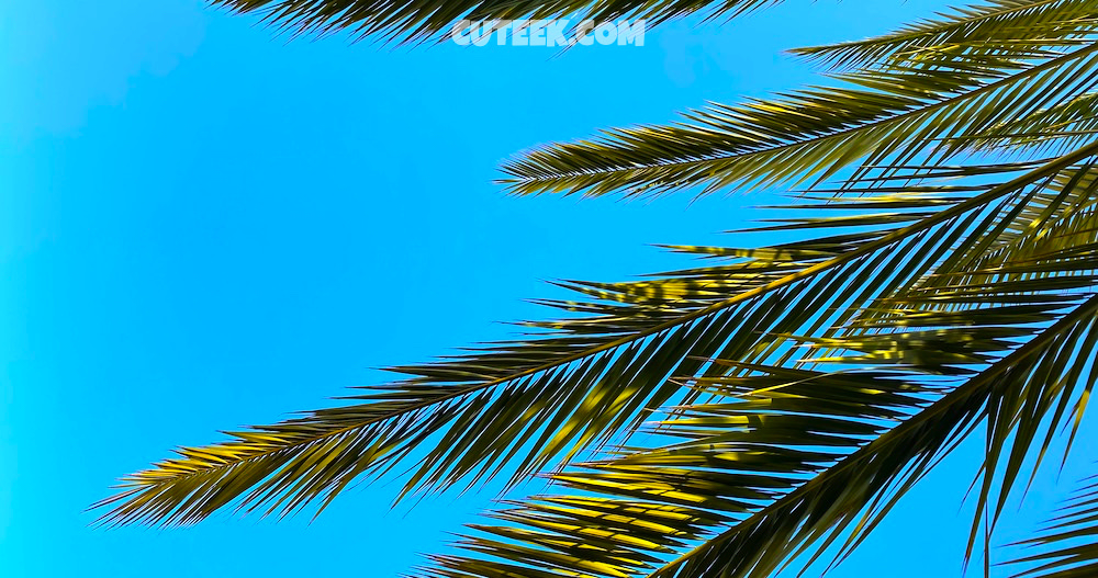 Palm Tree and Turquoise Sky